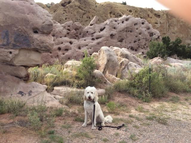 Pet Friendly hiking, walks, and off leash parks