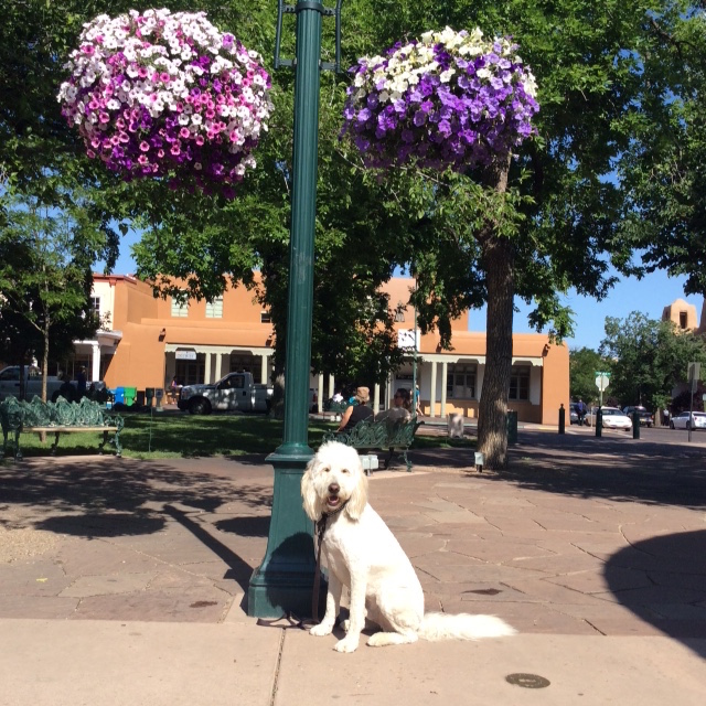 Dog below flowery lamp post. Two Casitas Santa Fe Vacation Rentals.